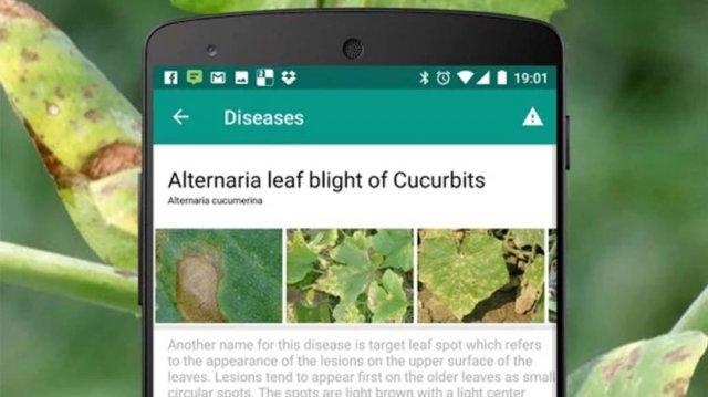 Kako utvrditi naziv neke biljke - Najbolje aplikacije za botaničare!