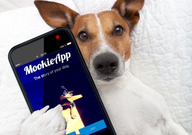 Mookie app je društvena mreža za pse i njihove vlasnike!